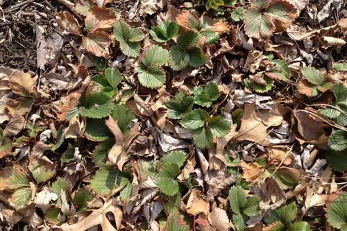 Что делать с листвой на даче осенью. Не знаете, что делать с опавшими листьями на даче? Решаем проблему вместе