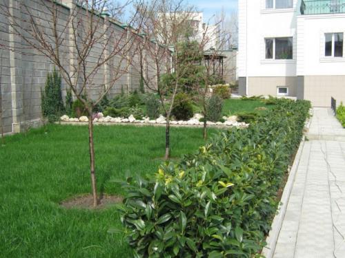 Когда лучше сажать косточковые деревья весной или осенью. Самое подходящее время